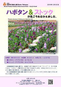 83記者発表◇ハボタン&ストック-161225.jpg