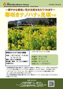 84記者発表◇寒咲きナノハナ見頃161226.jpg